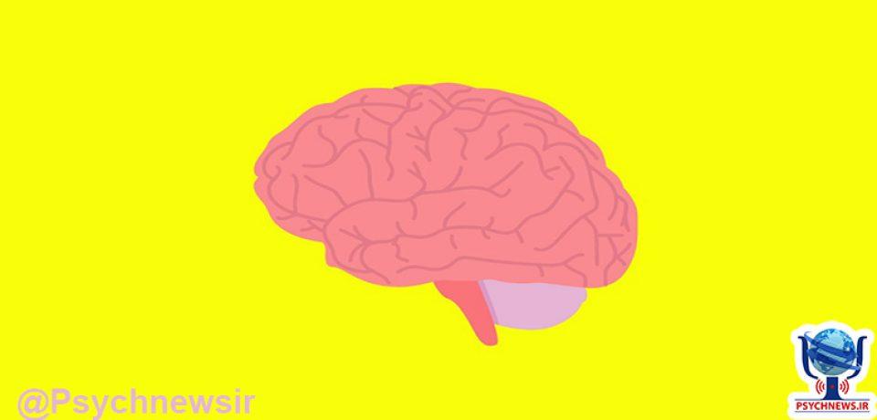 مغز مانند پوست پیر می شود!