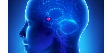 روش جدیدی برای درمان ترس های مربوط به فوبیا و PTSD