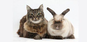 نگهداری از حیوانات خانگی برای بیماران اعصاب و روان مفید است