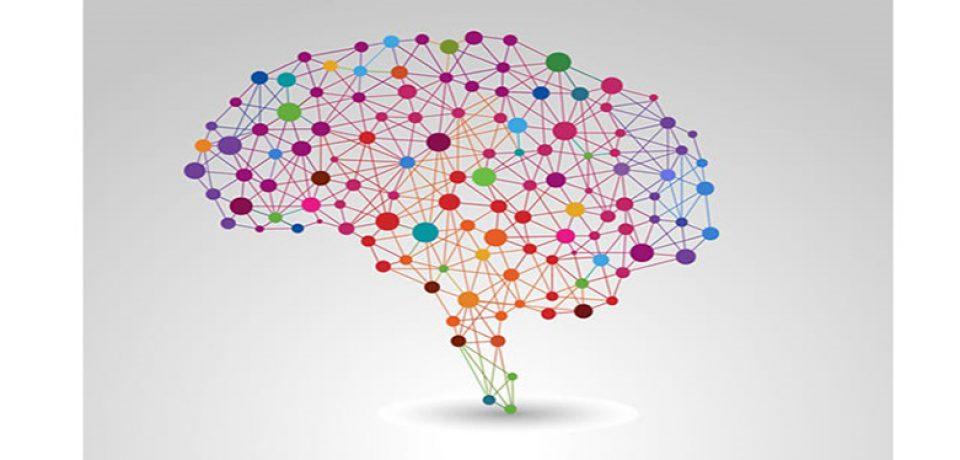 انجمنهای مغز و شناخت در دانشگاهها تشکیل می شود