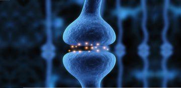یک قدم نزدیک تر به ساخت مغز مصنوعی