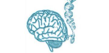 ضربه به سر ژن های مغز را تغییر می دهد