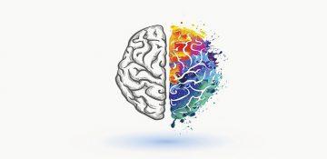 چرا مغز دو نیمکره دارد؟