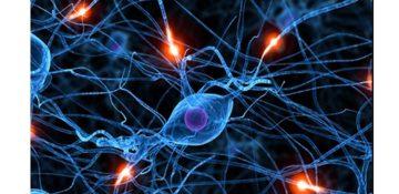 """شناسایی شبکه ای مخفی از """"مغزهای کوچک"""" که مسئول احساس درد در ما هستند"""