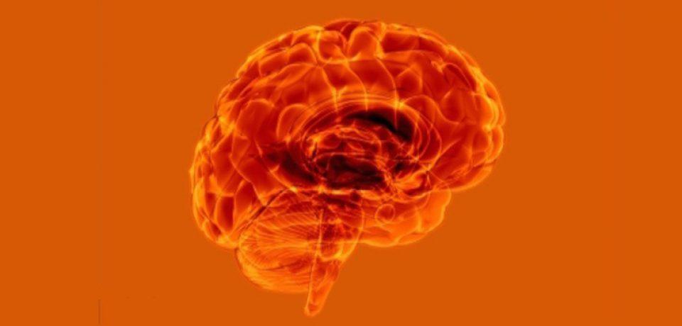 کشف سلول های پاکسازی در مغز