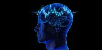 پژوهشگران مکانیزم پیش بینی داده های صوتی در مغز را شناسایی کردند