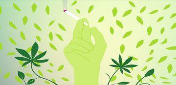 «گل» دومین مخدر مصرفی کشور معرفی شد