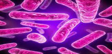 اهمیت وجود باکتری روده برای از بین رفتن اضطراب و افسردگی