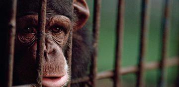 حیوانات افسرده؛ آیا حیوانات شبیه ما افسرده میشوند؟