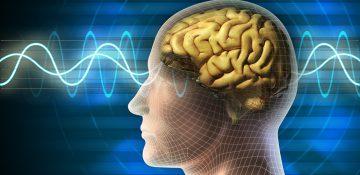 مواردی که موجب تغییر شکل مغز میشوند