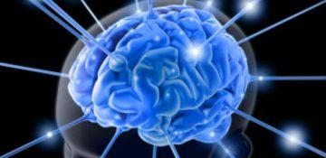 شناسایی مدارهای مغزی رفتارهای لذت جویانهی مغز
