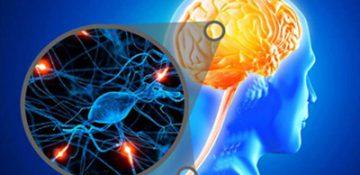 امکان درمان بیماری ALS با شناسایی مکانیسم یک پروتئین مولکولی