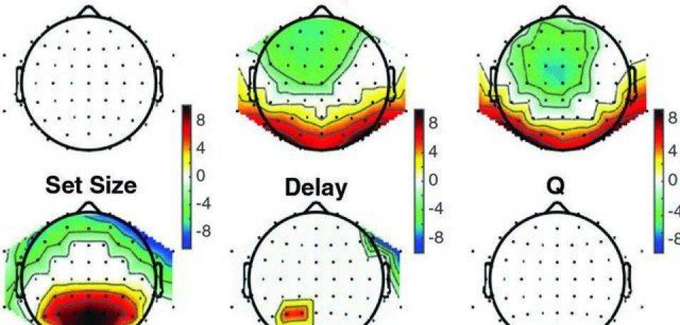 هنگام یادگیری افراد، دو سیستم مختلف مغز با هم همکاری میکنند.