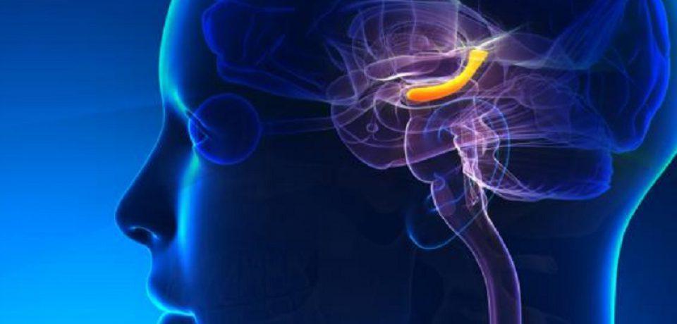 بخش حافظه مغز با اضطراب و افسردگی ارتباط دارد