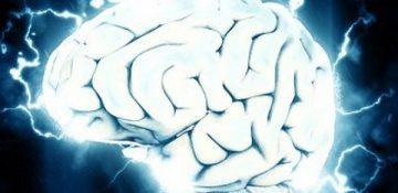 ارتباط بین قد و هوش ناشی از اندازه مغز است