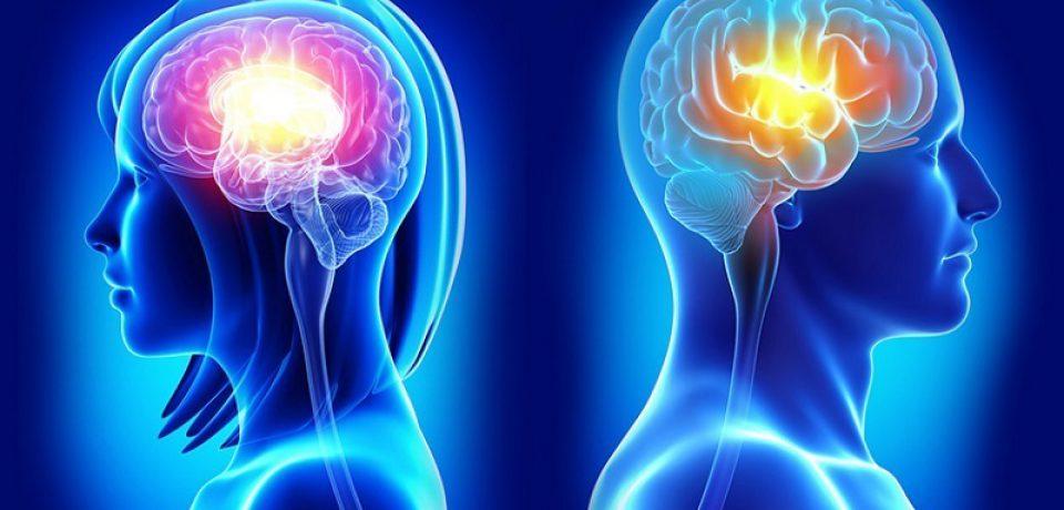 مغز بزرگتر سهم مردان ؛ عملکرد بهتر سهم زنان