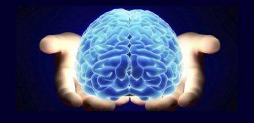 اختلال در ارتباط روده و مغز یادگیری و حافظه را تحت تاثیر قرار می دهد