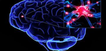 تفاوت نورونهای عصبی در مغز افراد باهوش با افراد عادی