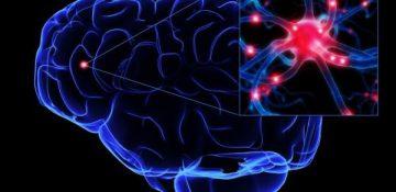 گام دانشمند ایرانی برای کمک به درمان اعتیاد/شناسایی نقش بخش قدامی مغز در حافظه پاداش