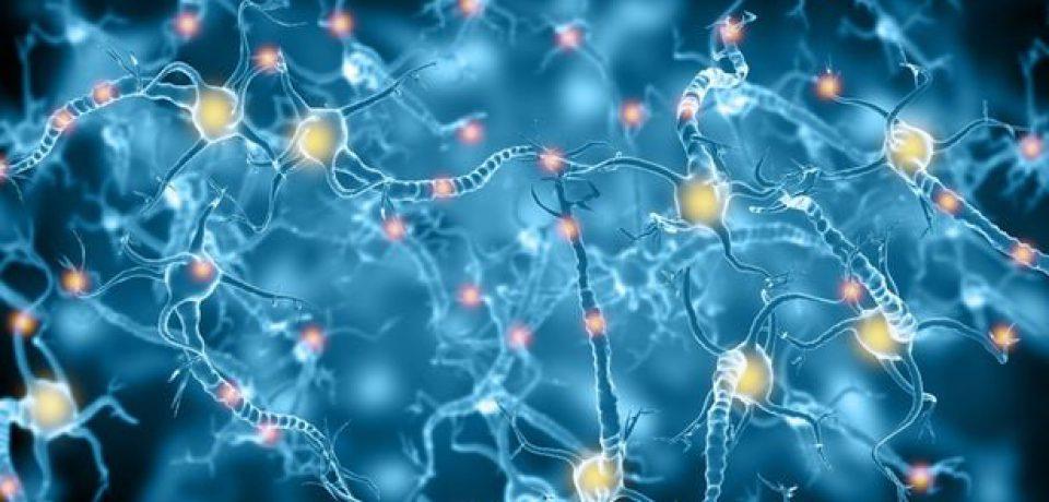 آناتومی مغز هر انسان کاملا شخصی است