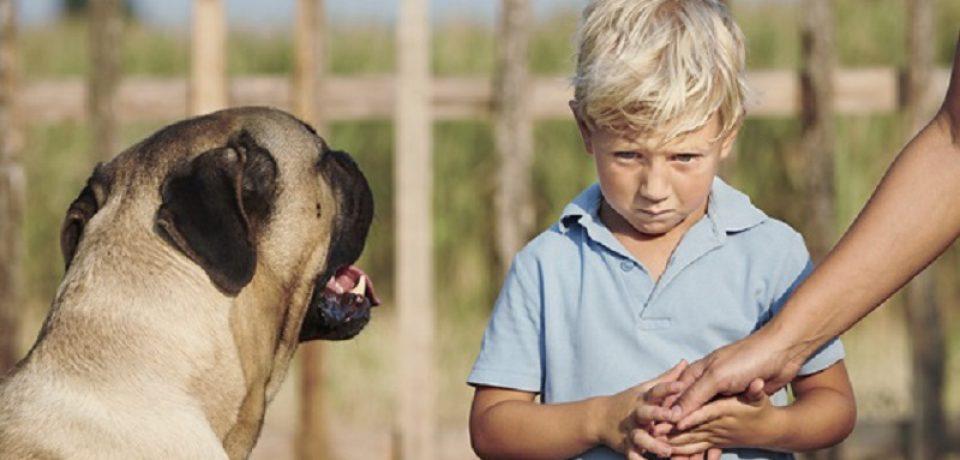چگونه فوبیای حیوانات را در کودکان برطرف کنیم؟