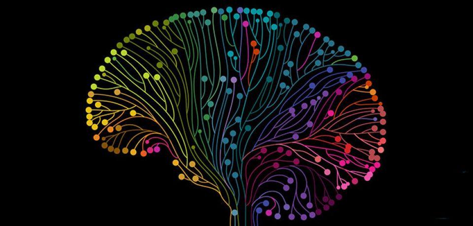امواج مغزیِ حافظه در خواب و بیداری یکسان هستند.