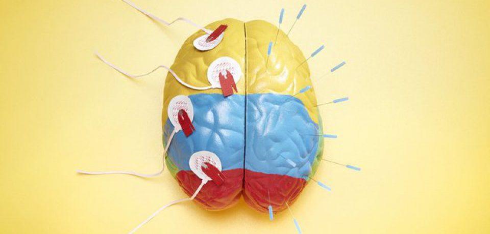 بشر یک گام به ساخت مغز نزدیکتر شد