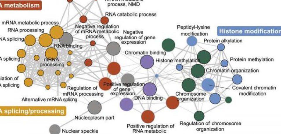 شبکه ژنتیکی مرتبط با بیماری اوتیسم شناسایی شد