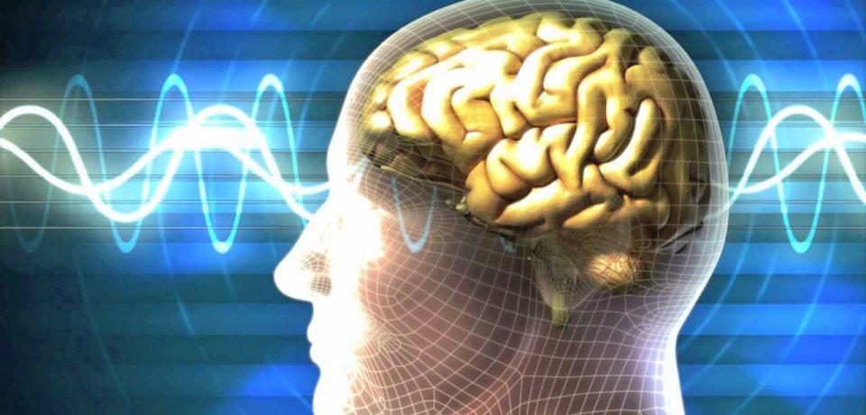 مغز خاطرات را به شکل معکوس احیا میکند