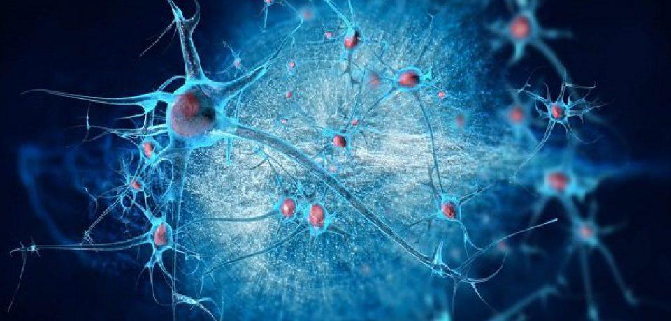 ترمیم آسیبهای مغزی با تبدیل سلولها به نورونهای جدید