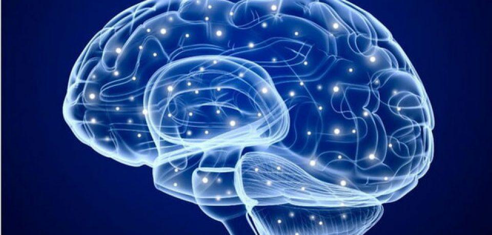 نقش مهم بخش غیرمنتظرهای از مغز در یادگیری و حافظه