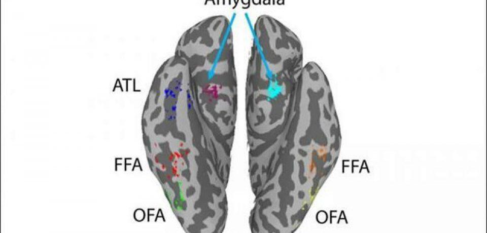تشخیص چهره با کمک اتصالات گسترده مغزی صورت میگیرد