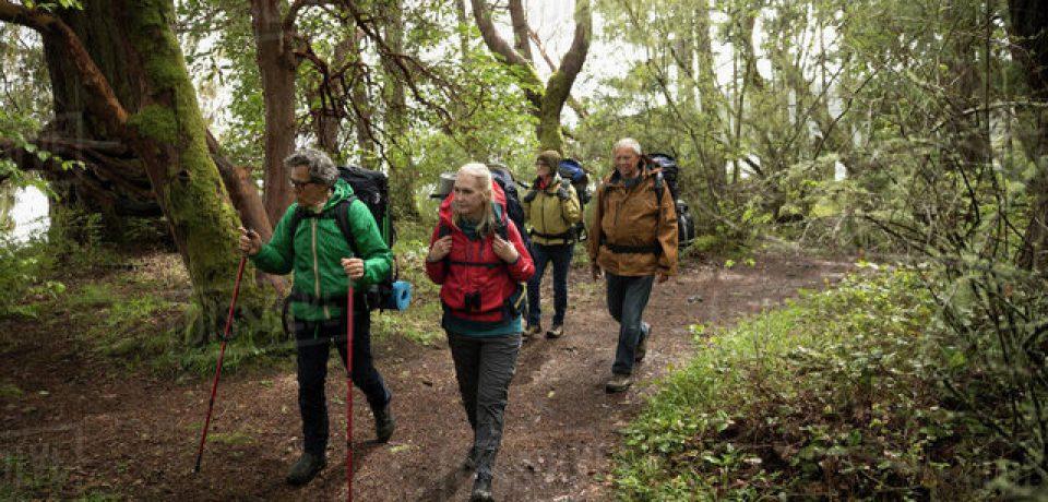 جنگل نوردی استرس را دور میکند