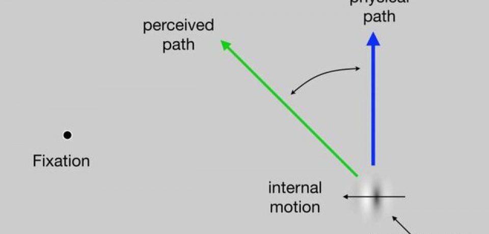 درک بصری آگاهانه در خارج از سیستم بینایی رخ میدهد