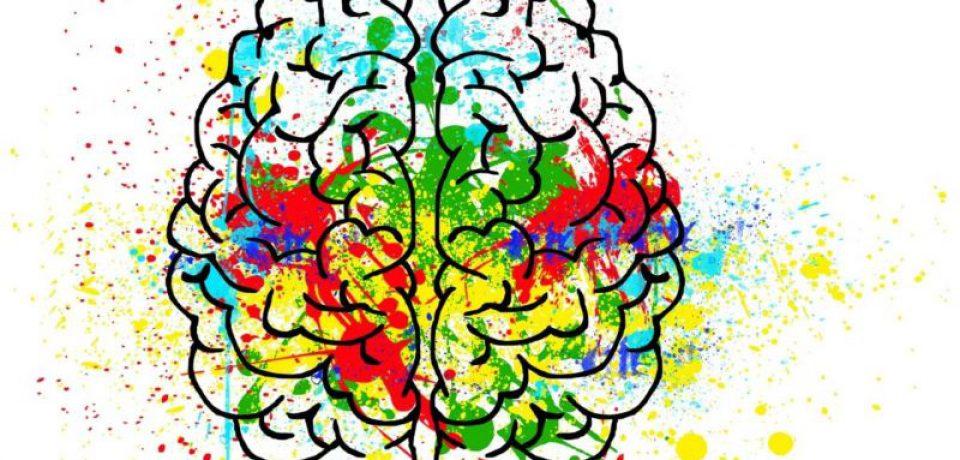 تنوع فعالیتها موجب سلامت مغز میشود
