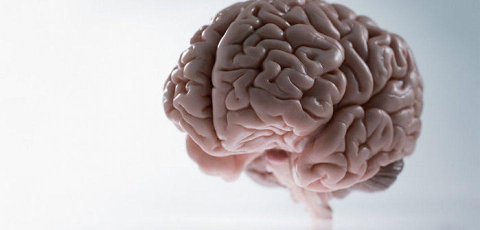 ۱۰ تفاوت بین مغز زنان و مردان را بدانید