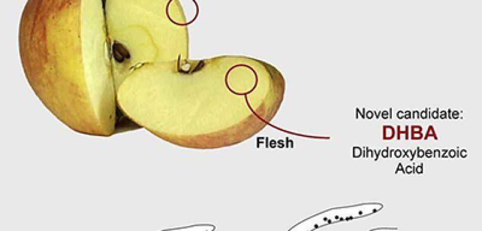 مصرف سیب خطر ابتلا به آلزایمر را کاهش میدهد!